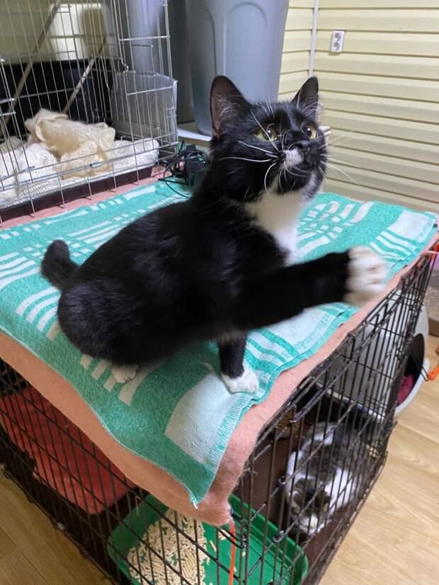 Мужчина представился Сергеем, хотел забрать кошку из приюта. Но оказалось, что в нашей базе он Дмитрий
