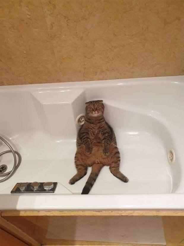Кошки, которые научились вести себя как люди (41 фото)