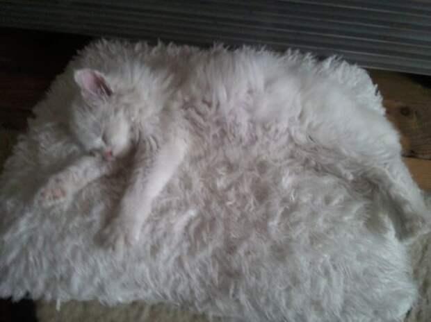 Если кот замаскирован, ты его найди попробуй