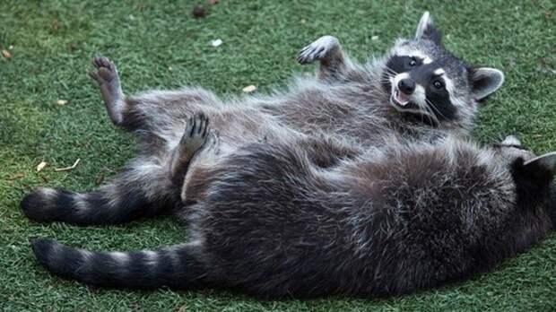 Названо число видов животных, умеющих смеяться