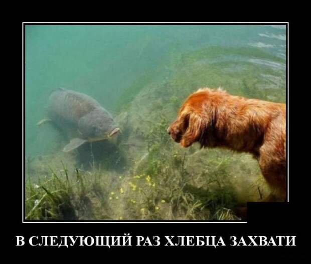 Демотиватор про рыбу и собаку