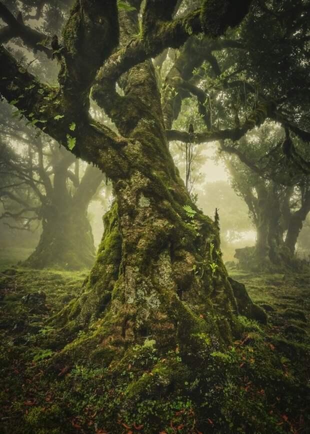 Премия «Одинокое дерево» Мадейра, Португалия. Фото: Анке Бутавич.