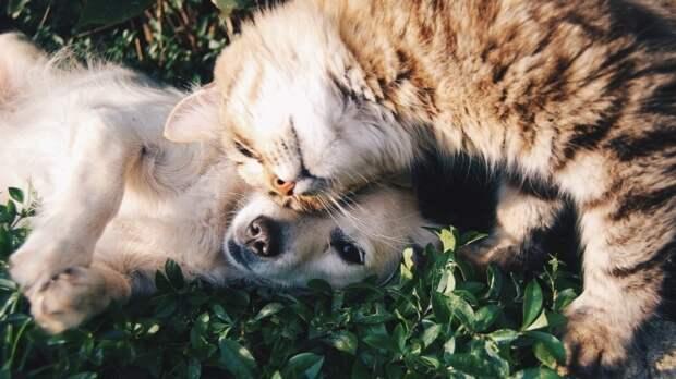 В Госдуме опровергли слухи о налоге на домашних животных