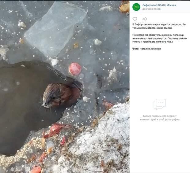 Фото дня: в Лефортове ондатры могут попасть в ледовую западню