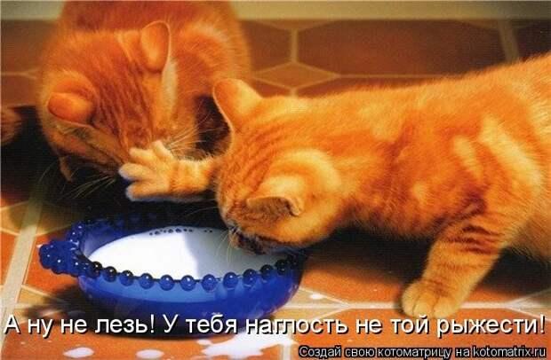1451737546_kotomatricy-29