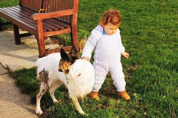 Красота вглазах смотрящего: женщина полюбила пса безноса ипередней лапы