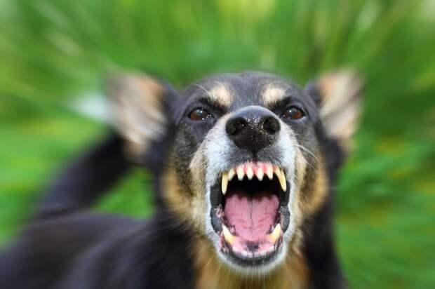В Сасове стая собак массово убивает кошек на улице