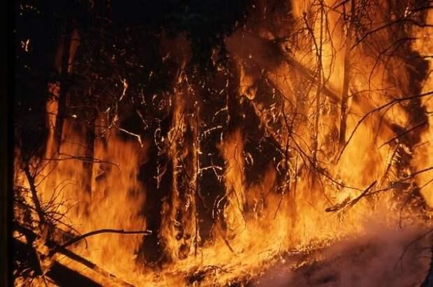 Площадь лесных пожаров в РФ выросла за сутки на 63%