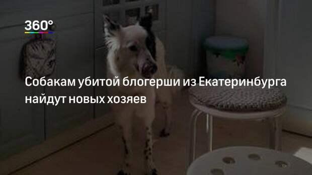 Собакам убитой блогерши из Екатеринбурга найдут новых хозяев