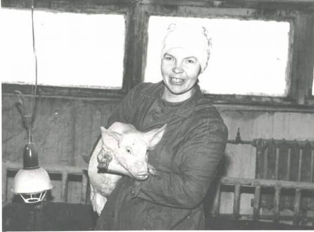 Одна из свинарок на свиноферме деревни Домозерово. Выращивание молодняка. Неизвестный автор, 1985 год, г. Череповец и Череповецкий район, Череповецкое музейное объединение.