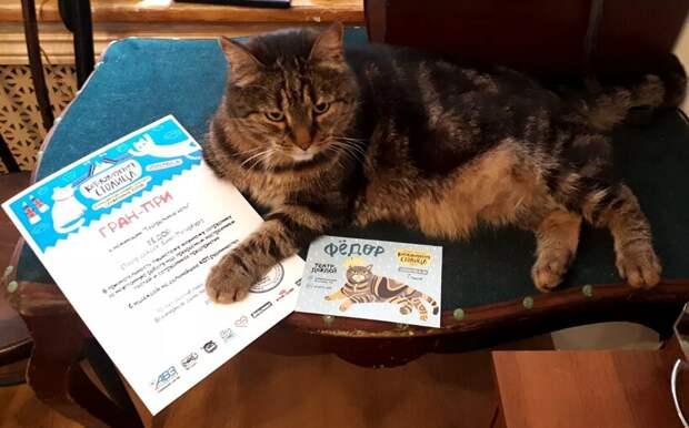 Кто победил во всероссийском конкурсе лучших служебных котов