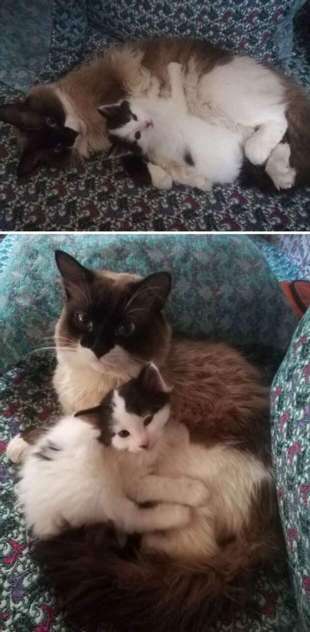 Питомцы в первые дни усыновления