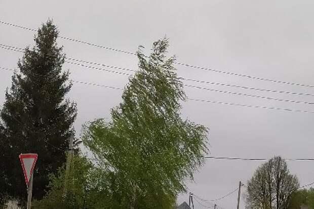 В ближайшие часы в Тамбовской области ожидаются гроза и сильный ветер