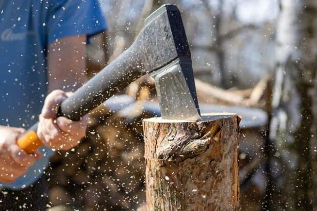 Территория вырубки леса на Украине достигла размеров Черногории