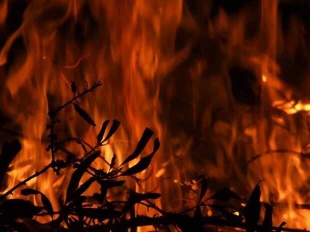 Пермские школьницы сожгли ферму ради видео в TikTok