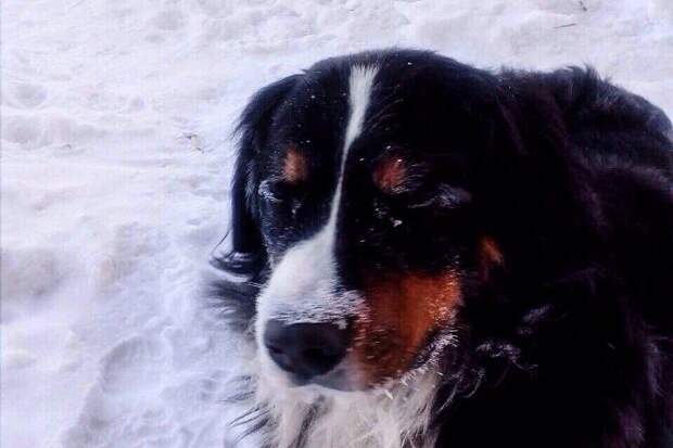 Пёс из Омска спас заживо похороненных котят