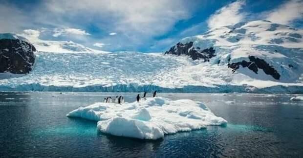 Какие изменения присходят в морских экосистемах Антарктики