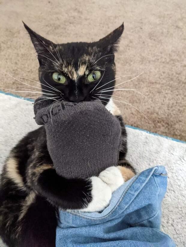 10 котов, которые любят пускать в ход свой кусь, но это вызывает лишь смех
