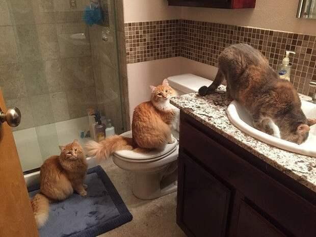 Позитивные кошечки и котики из нашей жизни