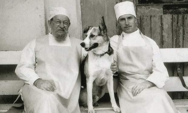 """Пёс отказывался кусаться и есть колбасу: как снимали """"Собачье сердце"""""""
