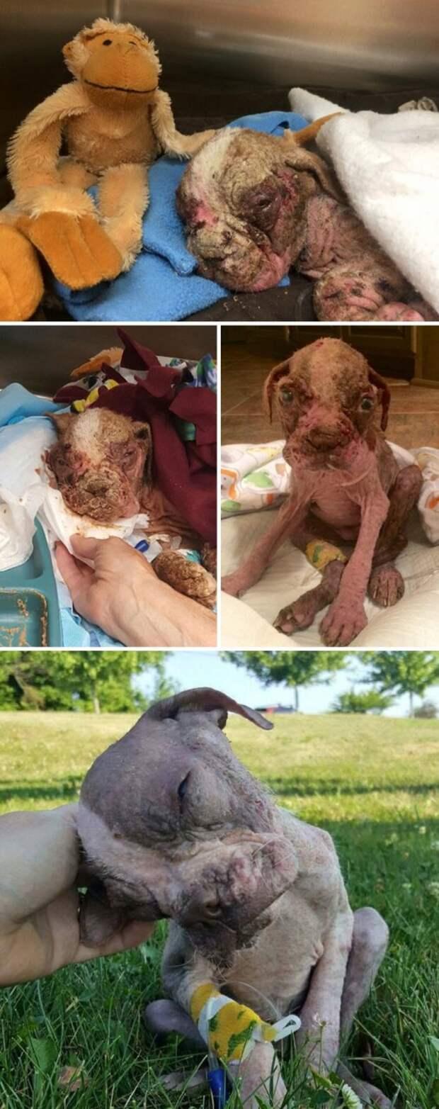 Брошщенный щенок был обречен на смерть, но чудо спасло его Счастливый конец, животные, спасение