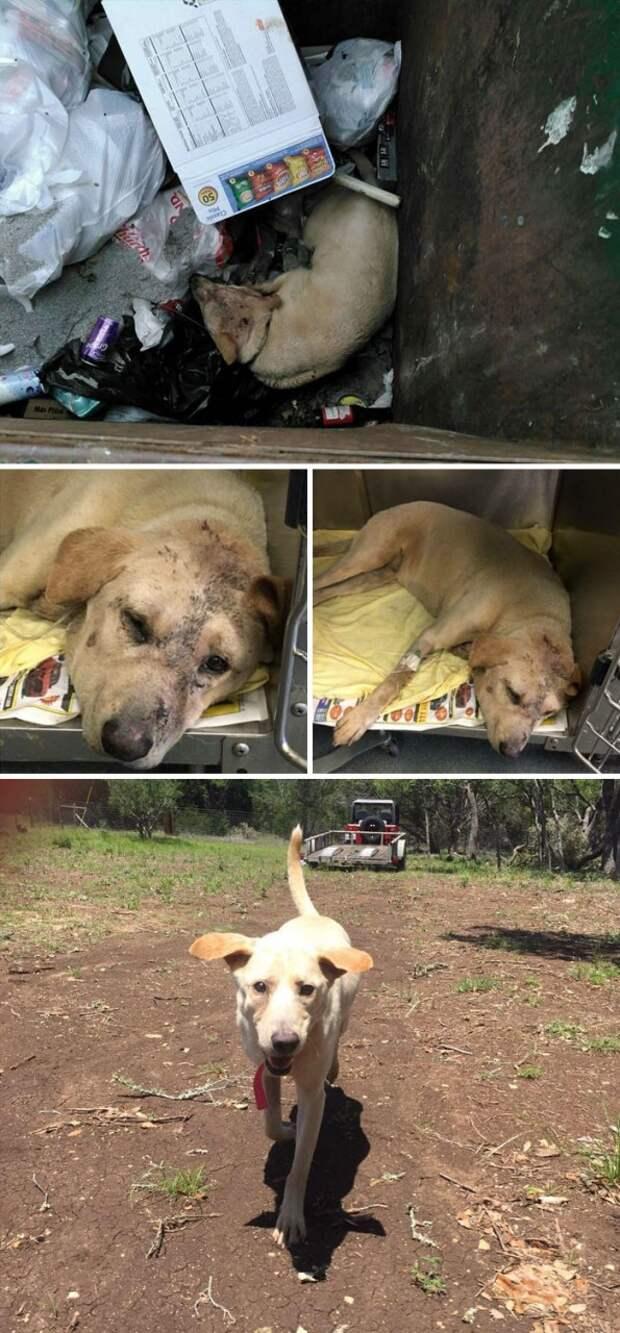 Выброшенный в мусорку пес мучился из-за сердечного приступа. К счастью, добросердечный  прохожий заметил это и спас ему жизнь Счастливый конец, животные, спасение