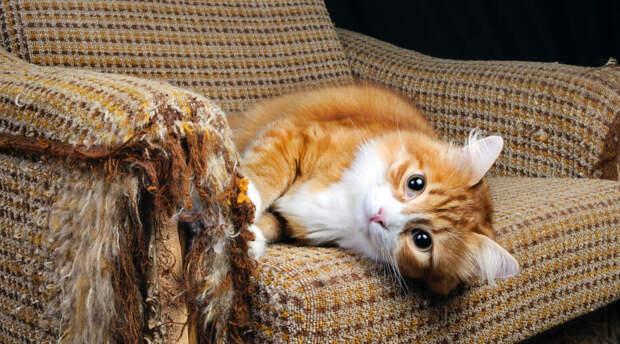 Как защитить диван от кошачьих когтей?