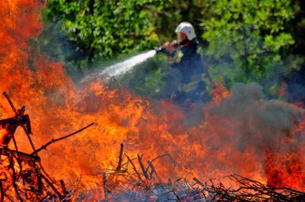 С 30 апреля в Севастополе введен особый противопожарный режим