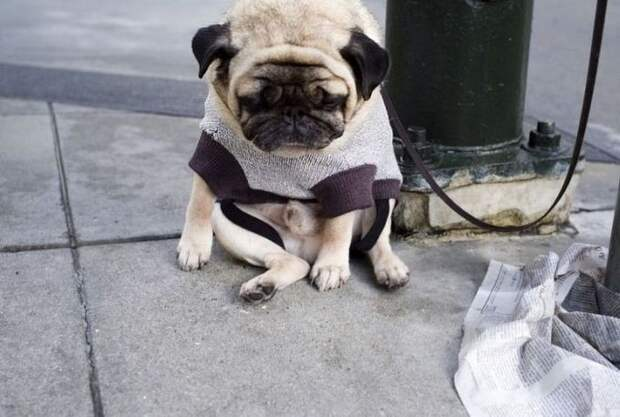 собаки потеряли доверие, смешные собаки, собаки не доверяют, обиженные собаки фото