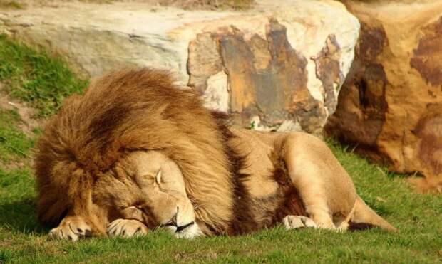 Какие сны видят животные: рассуждения и научные опыты