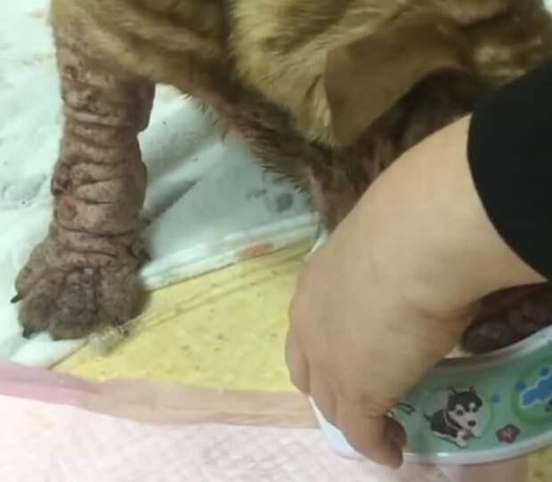 Брошенная облезлая собака питалась объедками и дрожала от холода, ведь у неё не было шерсти, чтобы согреться