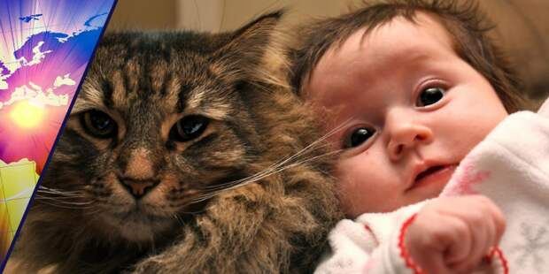 Милота, да и только: 20 потешных фото котиков и детей