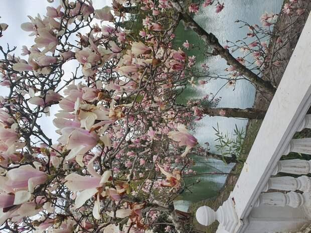 деревья в парке. весна
