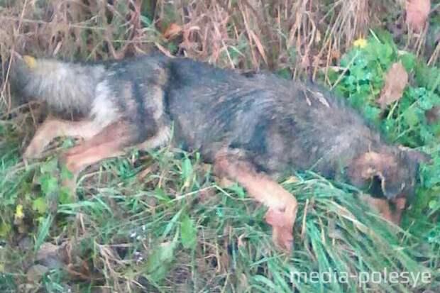 Неизвестные расстреляли стаю бездомных собак и скрылись... Но одна душа выжила!