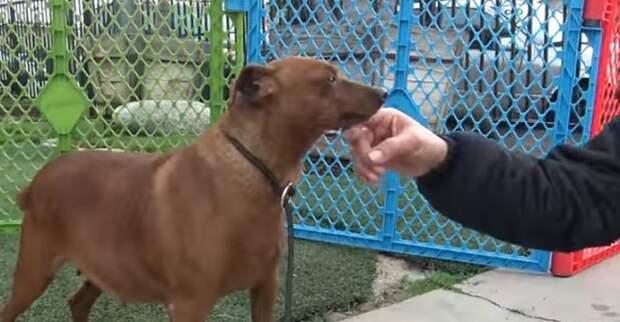 Собаку гладят