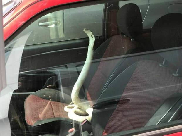 В машине с бывшей подружкой. | Фото: Newsbomb.