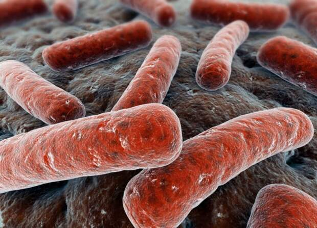 Ученые выяснили, почему туберкулезная палочка Коха неуязвима для лекарств