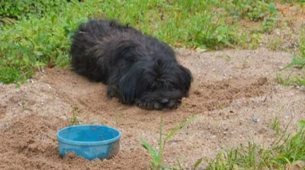 Черный пес лежал у дороги. Он искренне верил, что его хозяин вернется