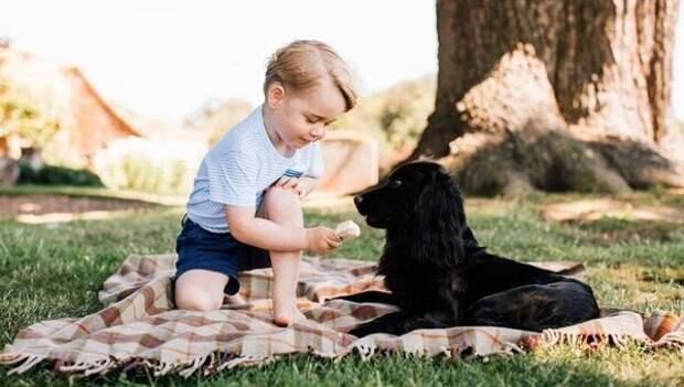 «Это — ребёнкина собака, Ральф теперь наш!» Как мой сын в 3,5 года у соседа собаку отжал