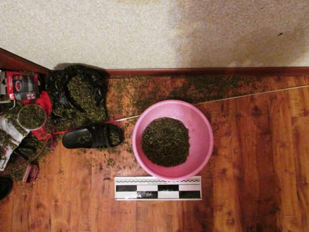 Любитель каннабиса устроил склад наркотиков в квартире знакомого на Марьинском парке