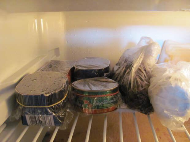 Стратификация семян в домашних условиях в холодильнике, таблица