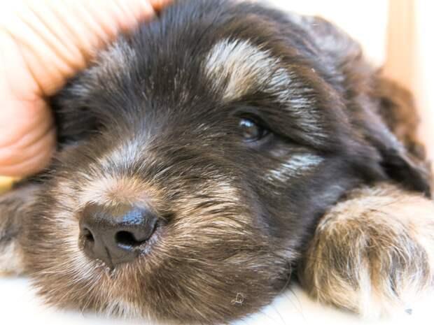 щенок отдыхает