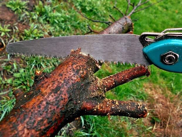 Во дворе дома в Минском переулке провели санитарную обрезку дерева