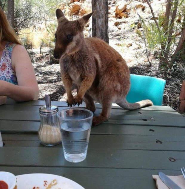 Тем временем в Австралии (13 фото)