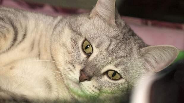 Кошки могут являться носителями опасной для беременных женщин инфекции