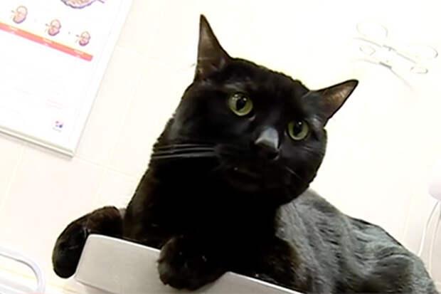 История одного замечательного кота-донора.