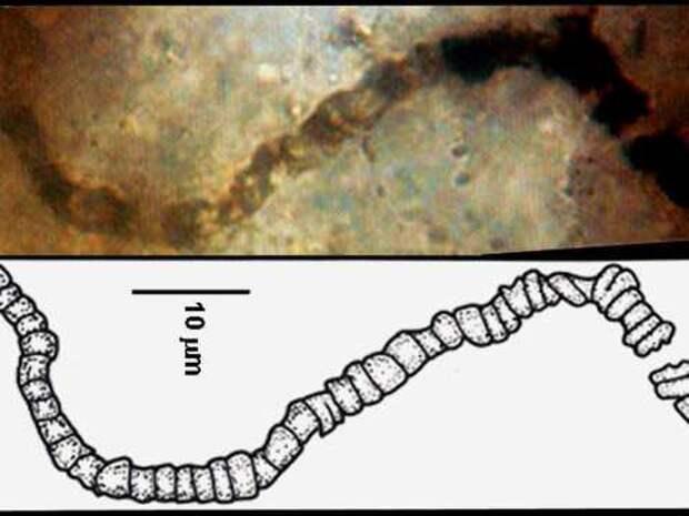 Три с половиной миллиарда лет назад жизнь на Земле уже существовала