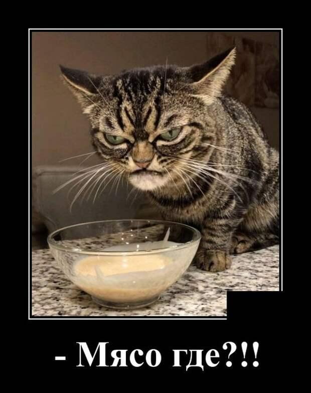 Демотиватор про еду кота