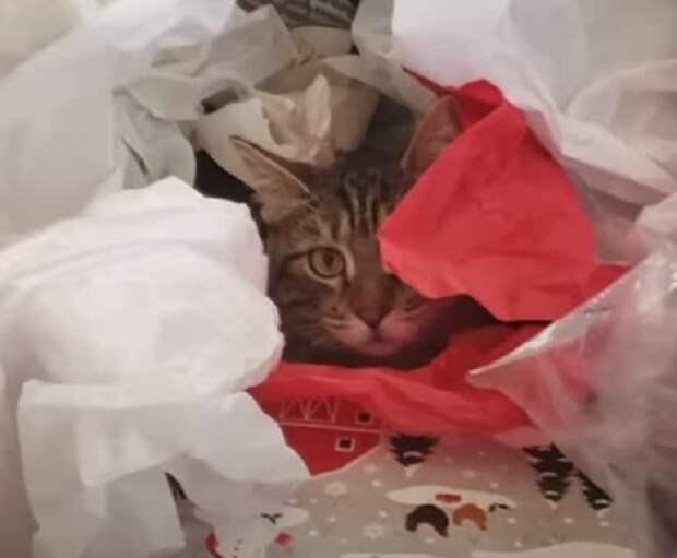 Кошка в бкмаге
