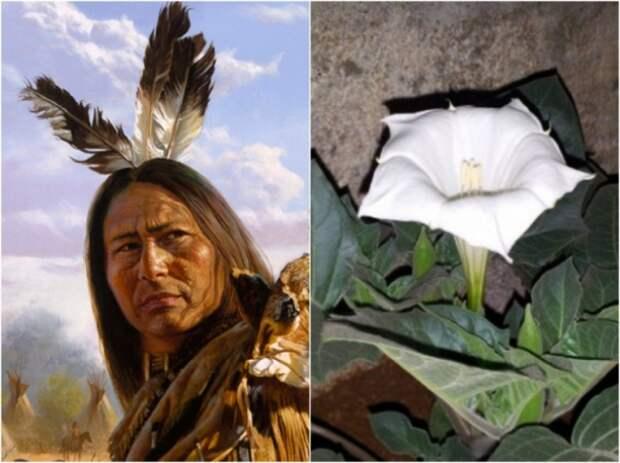 Племя алгонкинов из Канады. Испытание наркотиком